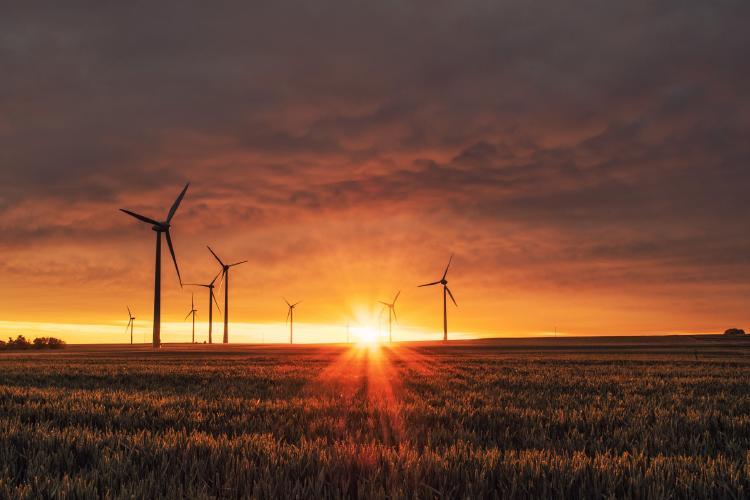 Campos de generación de energía eólica.