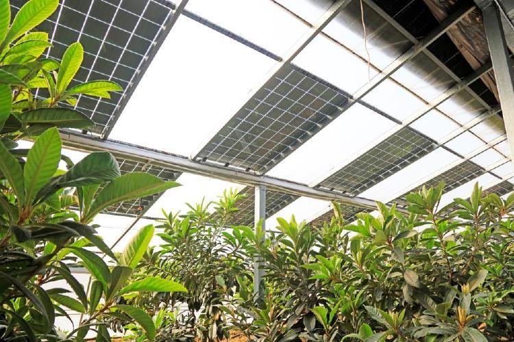 Invernadero fotovoltaico.